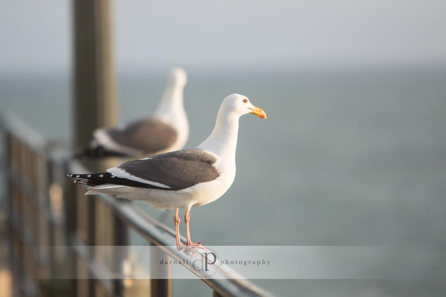 Huntington-Beach-Engagement-pictures_002